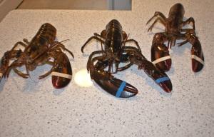 The Lobstah